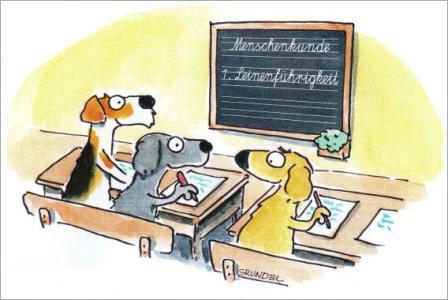 Hundetrainingschulbank